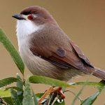 Chế độ dinh dưỡng khi nuôi chim cảnh sinh sản