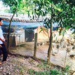 Chuyện làm giàu của nông dân Phan Văn Miền - t2 nong dan pham van mien 150x150