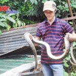Thành công từ nghề nuôi rắn hổ vện