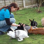 Một số điểm cần lưu ý trong chăn nuôi Thỏ - tho nha 5 150x150