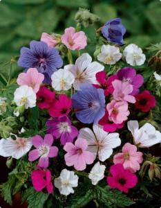Trồng hoa gì cho hương thơm khắp nhà ? - trong hoa gi thom1 233x300 1