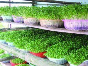 Mẹ đảm trồng rau sạch cho con ăn dặm - trong rau sach cho be an dam2 300x226