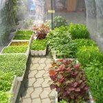 Chia sẻ cách trồng rau trên sân thượng cực dễ dàng - trong rau sach trong thung xop2 150x150