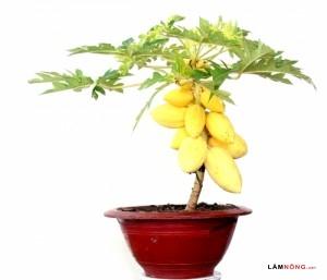 Cây thế bonsai và những quy tắc cơ bản (Phần 2) - bonsai cay an qua7 300x257