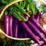 Hướng dẫn gieo trồng và chăm sóc cà rốt tím - ca rot tim 150x150