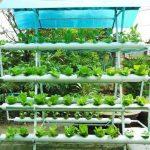 Cách trồng rau không cần đất - cach trong rau khong can dat 150x150