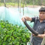 Cách nuôi rắn ri voi tại nhà đơn giản cho năng suất cao
