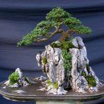 Cách chăm sóc cho cây Linh Sam bạn cần phải biết - cay linh sam 768x581 150x150