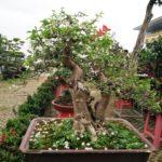 Cây thế bonsai và những quy tắc cơ bản (Phần 2) - cay the bonsai va nhung quy tac co ban phan 2 150x150