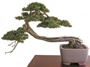 Cây thế bonsai và những quy tắc cơ bản (Phần 1) - cay the bonsai2 300x222