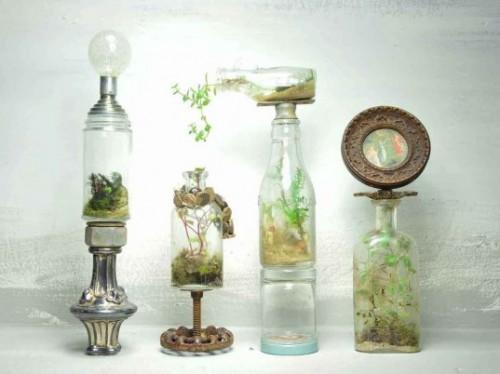 Hướng dẫn trồng cây trong Lọ thuỷ tinh - cay trong lo 9