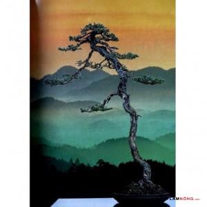 Cách tạo thế cây Tùng bonsai của nghệ nhân Nhật Bản - cay tung bonsai1 300x300
