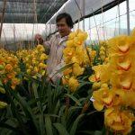 Kỹ thuật nhân giống và nuôi trồng địa lan Việt - dia lan vang 150x150