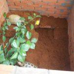Chăm sóc rùa cạn trong điều kiện nuôi nhốt