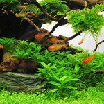 forests-edge-be-thuy-sinh-158-iaplc-2013-10-bouaqua-0987533700_zps113286ba