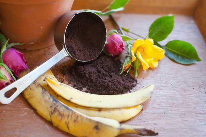Tái chế bã cà phê và vỏ chuối thành loại phân bón thần kì giúp hoa hồng nở siêu đẹp - hoa hong 201606201