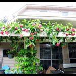 Ý tưởng làm giàn hoa tạo cảnh quan đẹp cho ngôi nhà