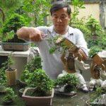 Cách chăm sóc cây bonsai trồng trong nhà - hqdefault 6 150x150