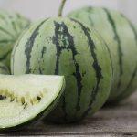 kỹ thuật trồng dưa hấu ruột trắng