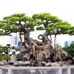 Những nguyên tắc chọn chậu cho cây kiểng bonsai - nhung nguyen tac chon chau cho cay kieng bonsai 150x150