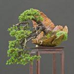 Cây bonsai dáng huyền