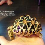 Cách chăm sóc rùa cảnh tỉ mỉ cho người mới nuôi