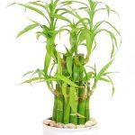5 loại cây xanh tốt trong nhà thiếu sáng