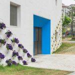 Trồng vườn hoa trên tường nhà