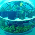 Trồng rau trong nhà kính dưới đáy biển