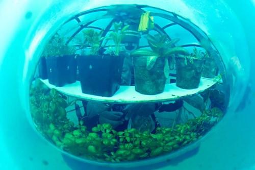 Trồng rau trong nhà kính dưới đáy biển - 1204323010468321620242704391843436056421598n puia
