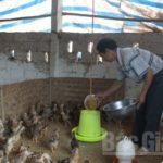 Mô hình chăn nuôi gà bằng thảo dược