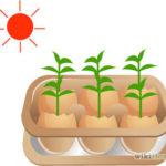 Cách trồng cây trong vỏ trứng