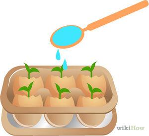 Cách trồng cây trong vỏ trứng - 300px check your starter garden daily step 16