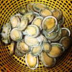 Kỹ thuật nuôi treo bào ngư trên biển - bagraveong1b00trograven zps2e18e35f 150x150