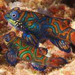 Chiêm ngưỡng 10 loài cá cảnh đẹp nhất thế giới