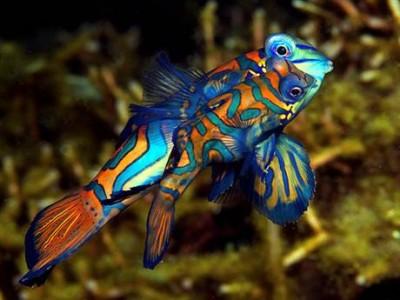 Chiêm ngưỡng 10 loài cá cảnh đẹp nhất thế giới - cacanh 03 400x300