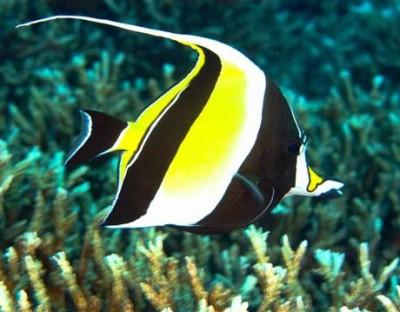 Chiêm ngưỡng 10 loài cá cảnh đẹp nhất thế giới - cacanh 11 400x312