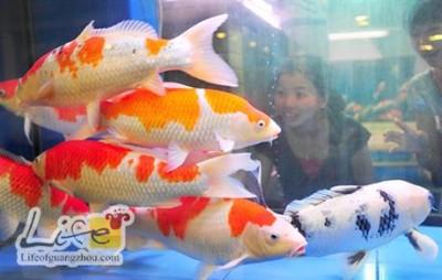 Chiêm ngưỡng 10 loài cá cảnh đẹp nhất thế giới - cacanh 13 400x254