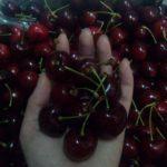 cherrydouc2
