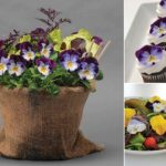 Hướng dẫn kinh nghiệm trồng, chăm sóc hoa păng-xê