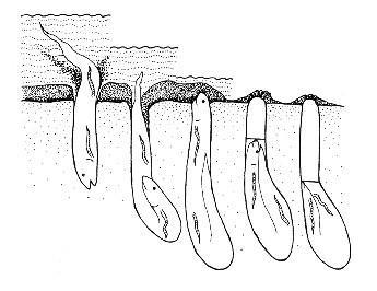 Cá phổi khiến dân chơi 'phát sốt' - lungfishsleep
