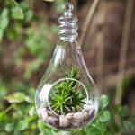5 lưu ý khi chăm sóc cây không khí - me man ngam nhung chau cay khong khi dep den nao long 1 150x150