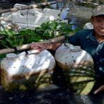 Độc đáo nuôi Lươn trong can nhựa