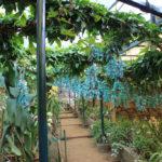 Phương pháp nhân giống hoa móng cọp xanh bằng chiết cành