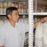 Kỹ thuật trồng nấm kim châm kết hợp Airocide