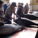 Kỹ thuật câu cá ngừ đại dương - 5658085e56eda 150x150