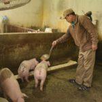 Mô hình nuôi lợn bằng thuốc bắc - 56c44b8ade756 150x150