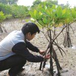 Kỹ thuật trồng cây đước - ky thuat trong cay duoc 150x150