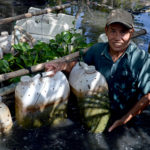 Mô hình nuôi thâm canh lươn đồng trong can nhựa