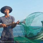 Mô hình nuôi cá bớp